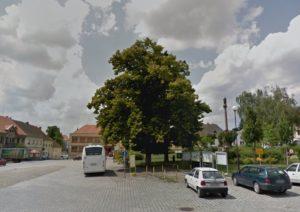 Lípa republiky na Masarykově náměstí v Mirovicích
