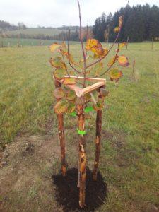 Strom rodu Zdražilů a Kollingerů v Chlumu