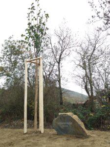 Strom republiky v Balkovech u Dolan