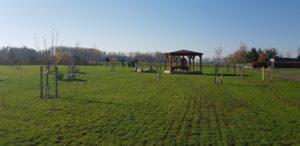Lípa republiky v parku Přátelství v Opavě
