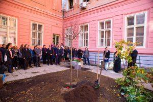 Lípa republiky na Pedagogické fakultě Univerzity Karlovy v Praze