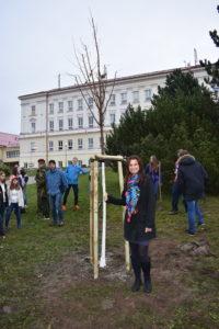 Lípa republiky u ZŠ Kamenický Šenov