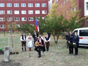 Lípa republiky v areálu nemocnice v Chomutově