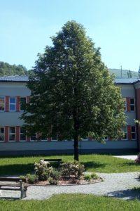Strom republiky ve Zlatých Horách (1998)