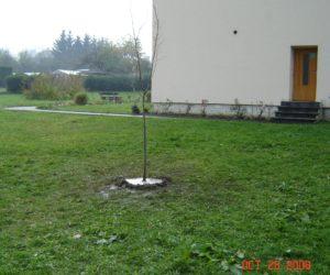 Strom republiky ve Zlatých Horách (2008)