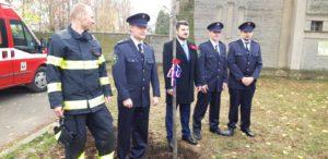 Lípa republiky před hřbitovem v Újezdě nad Lesy